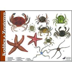 Herkenningskaart | Krabben en zeesterren