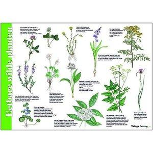 Herkenningskaart | Eetbare wilde planten