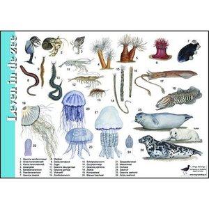 Herkenningskaart | Leven in de zee