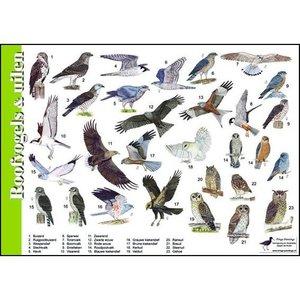 Herkenningskaart | Roofvogels & uilen